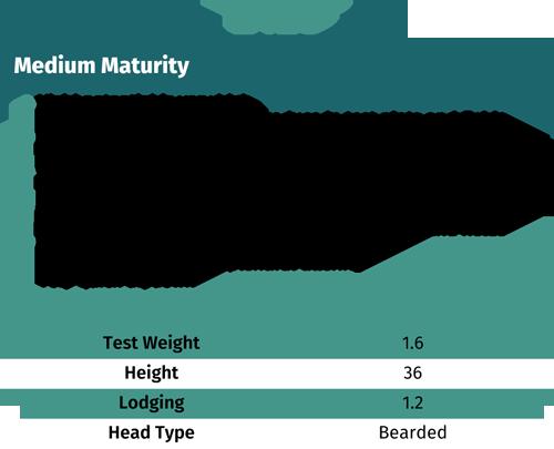 2123 medium maturity wheat seeds