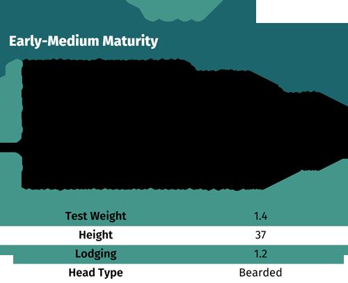 7511 early-maturity wheat seeds