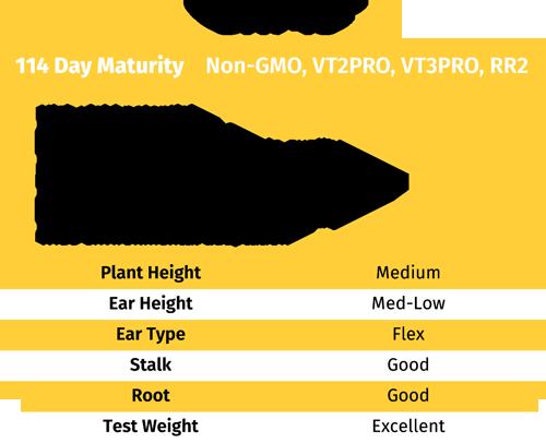 GH743 NON-GMO Corn seed
